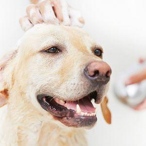 Cosmetice veterinare
